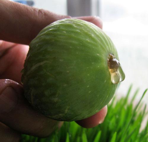 fig honey